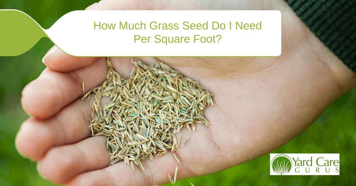 How Much Grass Seed Do I Need Per Square Foot D L Supply