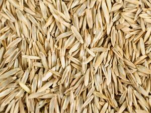 Grass Seed $121.00/ 50lb.Bag