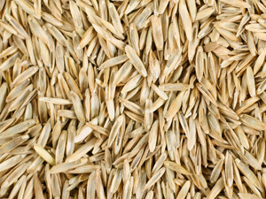 Grass Seed $61.50/ 25lb.Bag